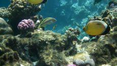 Открытие морского коллагена и его преимущества